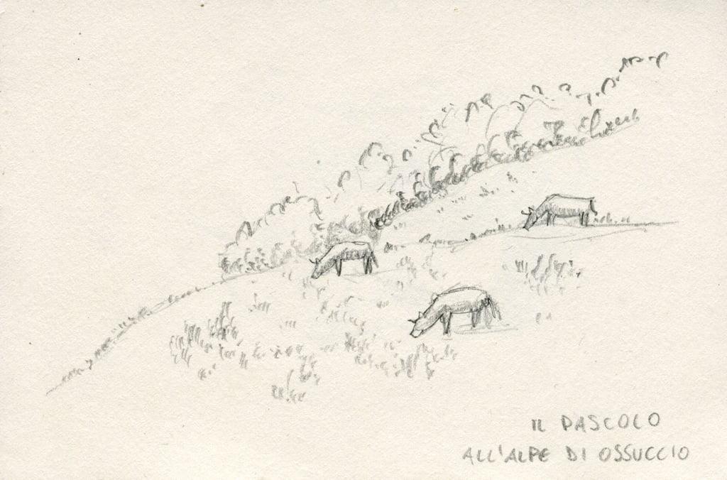 disegno a matita di mucche al pascolo all'alpe di ossuccio